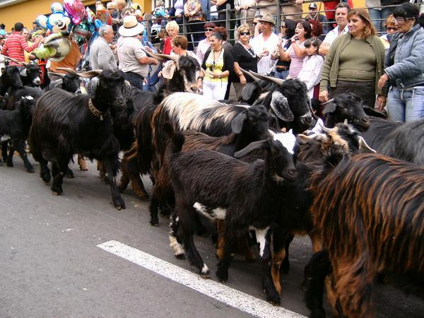 Romeria 2008 in Guamasa auf Teneriffa