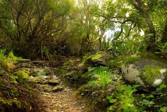 Entdecken Sie die geheimnisvollen und zauberhaften Landschaften des Anagagebirges.