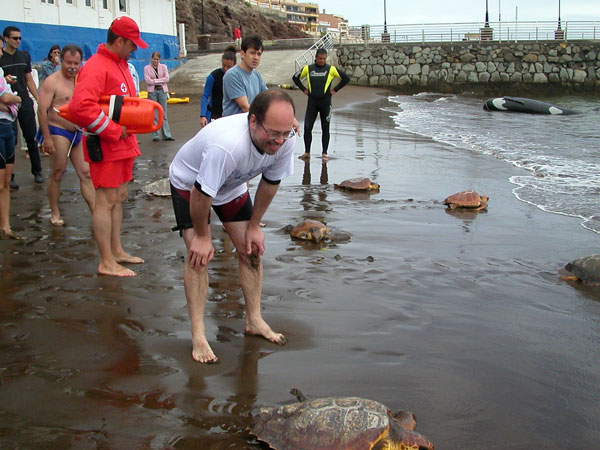 Sea turtles are regularly released by the Neotrópico foundation