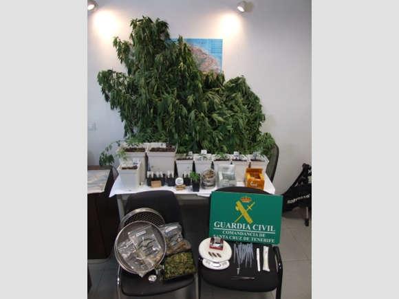Marihuana-Pflanzen in allen Größen wurden beschlagnahmt.