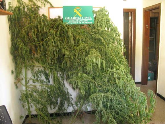 Die größeren Pflanzen der Bewohnerin von Valverde.