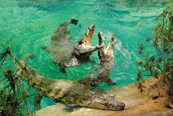 Krokodile zählen zu den Attraktionen des Parks