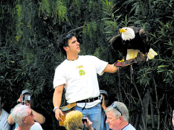 Die Falkner lassen die Vögel dicht über den Köpfen des Publikums fliegen