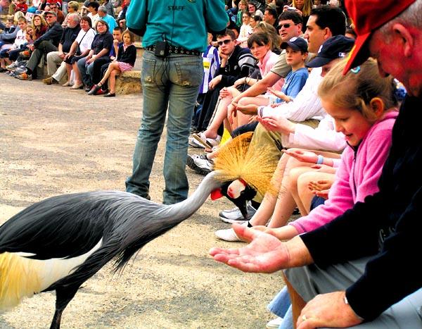 Ein Teil der Vögel ist sehr zutraulich, darf aber nicht gefüttert werden