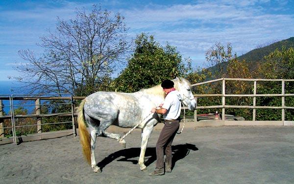 Langsam wird dem Pferd das gewünschte Verhalten nahegebracht