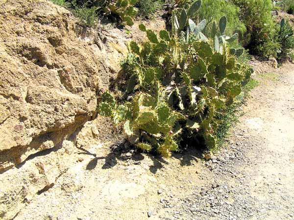 Pflanzen, die die Trockenheit lieben, säumen den ersten Abschnitt