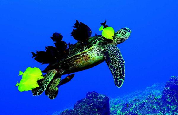 Schildkröten-Impression