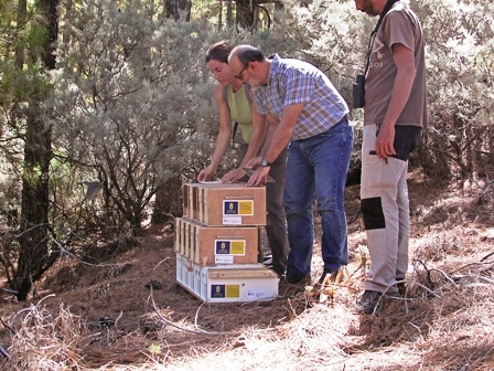 The first 15 Canarian chaffinches fitted with tracking devices will provide valuable data