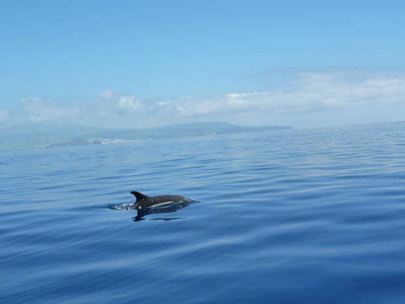 In den Gewässern der Kanarischen Inseln kommen 27 Wal- und Delfinarten vor.