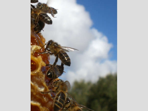 Bienen-Workshop für Klein und Groß