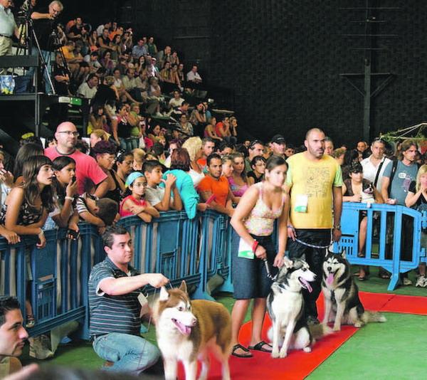 Das dichte Gedränge auf der Hundeausstellung in Puerto de la Cruz hat selbst die Veranstalter überrascht
