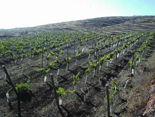 Die Weinberge der Bodega Tierras de Aponte