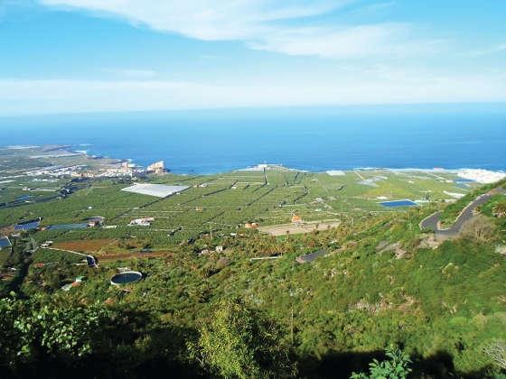 Grüne Plantagen auf der Isla Baja, so weit das Auge reicht.