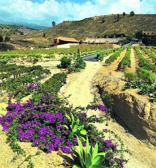 Der Wein wird auf insgesamt 19 Hektar Land angebaut