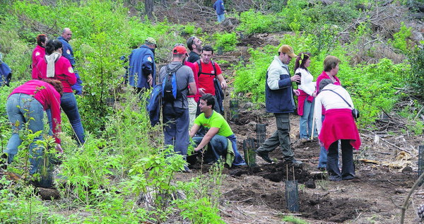 Die Aufforstungsarbeiten in der Zone Chajaña in der Gemeinde Arico sind in vollem Gang