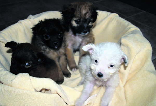 Mini-Hundebabies