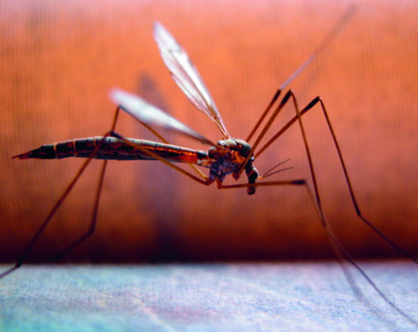Mosquitoes are one culprit of the spreading diseases