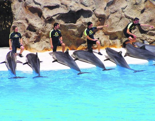 Eines der größten Delfinarien Europas befindet sich im Loro Parque