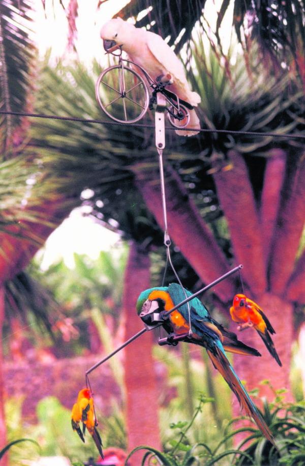Die erste Papageien-Show Europas, Aufnahme aus dem Jahr 1972