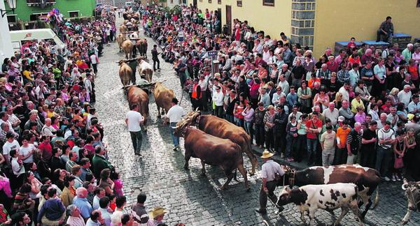 An San Antonio Abad stehen die Tiere im Mittelpunkt des Geschehens