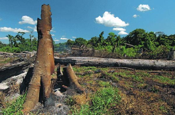Vor vor kurzem noch tropisches Leben florierte, hinterlassen die Rodungen im Amazonas-Regenwald kahle Flächen.
