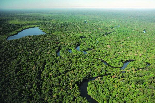 Die Zerstörung der Regenwälder führt zu einer Beschleunigung der Erderwärmung.
