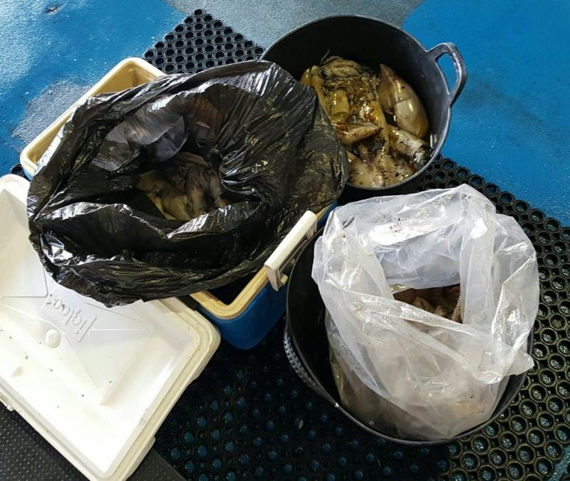 Selbst wenn die Population der Pfeilkalmare groß zu sein scheint, müssen die Fangquoten eingehalten werden.