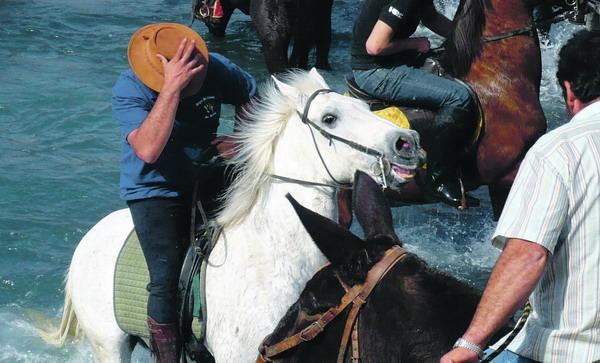 Der Ritt ins Meer – für Reiter und Pferde eine rasante Angelegenheit