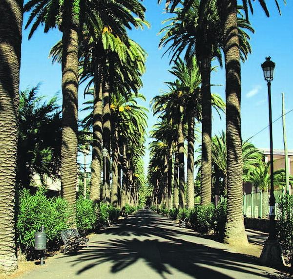 Ganz unerwartet stößt man auf die beeindruckende Palmenallee – auf der man so richtig schön zwischen schönen Anwesen schlendern kann.