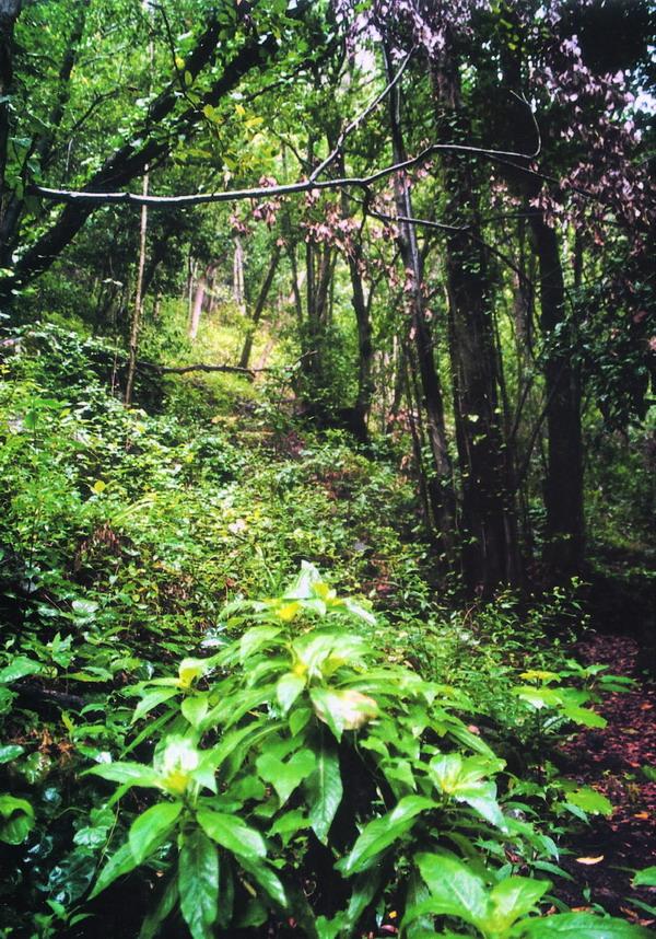 Pilzexkursionen werden in die Lorbeerwälder von Los Tilos unternommen