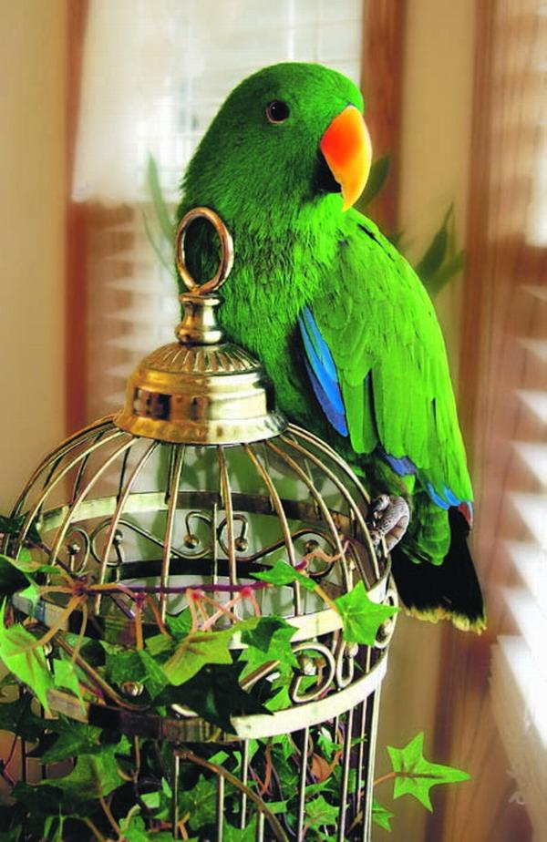 Papageien machen den Tag bunt