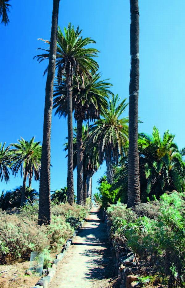 Durch Palmenhaine und blühende Natur führt der Spazierweg, der für die ganze Familie geeignet ist.
