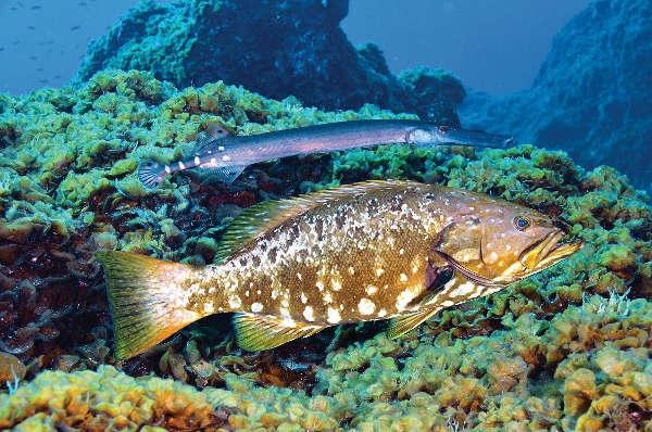 Das Mar de las Calmas bietet eine unglaubliche Artenvielfalt.