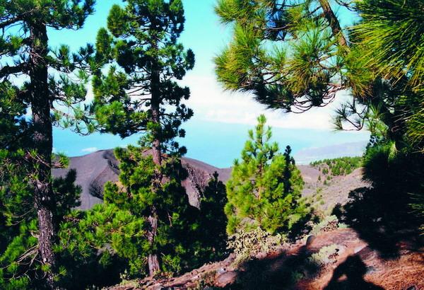 """Zu den Naturräumen im Norden gehört das Kiefernnaturreservat """"Pinar de Garafía"""""""