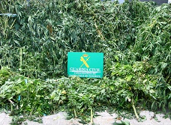 Der Anbau der Cannabis-Pflanze wurde im großen Stil betrieben und war gut organisiert.