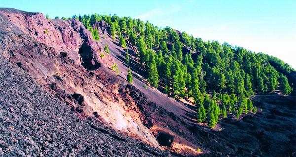 """Am Bergkamm der """"Cumbre"""", wo die Vegetationszone des Kiefernwaldes in die Subalpine Hochgebirgsformation übergeht"""