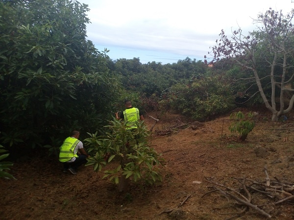 Police officers are visiting the affected plantations in search of clues