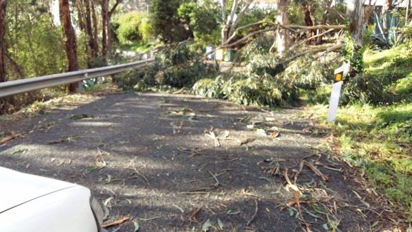 Äste und ganze Bäume blockierten viele Straßen.