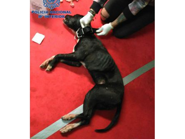 Die Hunde wurden mit aufputschenden Mitteln gedopt.
