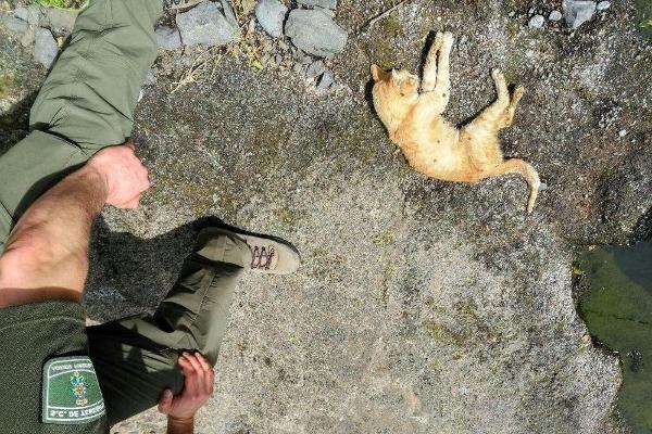 Auch diese Katze wurde vergiftet. Wie und warum ist noch unklar.