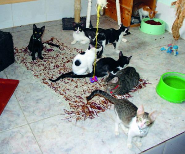 Im Katzenhaus von K9 warten rund 40 Katzen darauf, adoptiert zu werden