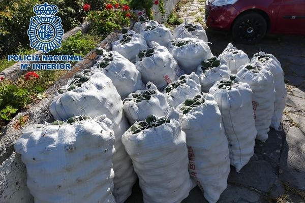 Bereits 18 Säcke mit 1.400 Kilogramm Avocados wurden von Unbekannten geerntet.