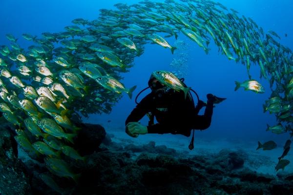 Die Welt unter Wasser vor der Südküste Teneriffas ist bezaubernd schön.