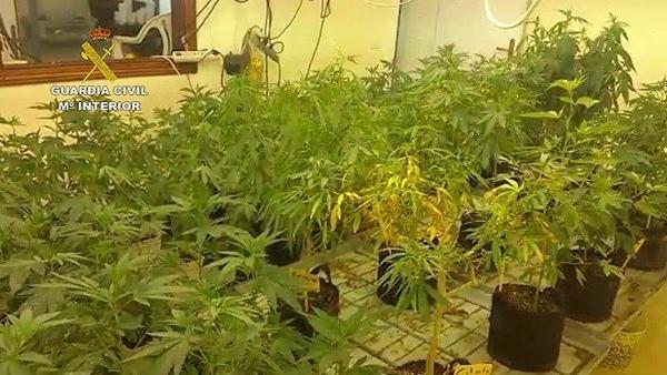 Marihuana-Plantage in El Rosario.