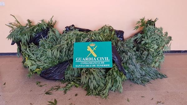 Die Marihuanapflanzen waren bereits geerntet. Der starke Geruch hat die Polizei aufmerksam gemacht.