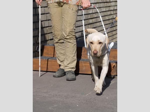 Weil sein Blindenhund erkrankte, sollte die Urlaubsreise nach Fuerteventura ins Wasser fallen.