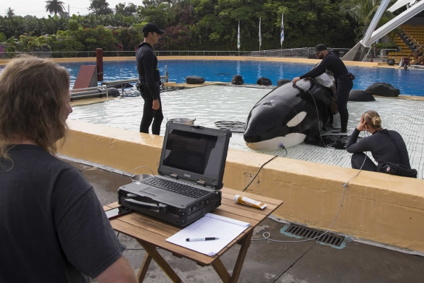 Die Erkenntnisse, die aufgrund der Forschungen an den Orcas gewonnen werden, können zum Schutz der wild lebenden Tiere eingesetzt und auch auf andere Großwale übertragen werden.