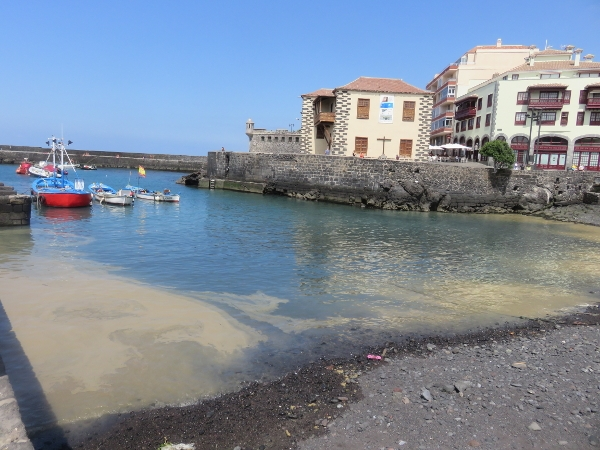 Die hässlichen Algenblütenteppiche waren Mitte August auch im Norden Teneriffas, in Puerto de la Cruz, angekommen.