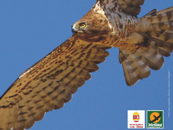 Eagles, falcons and vultures are magnificent indicators of the health of our natural ecosystem
