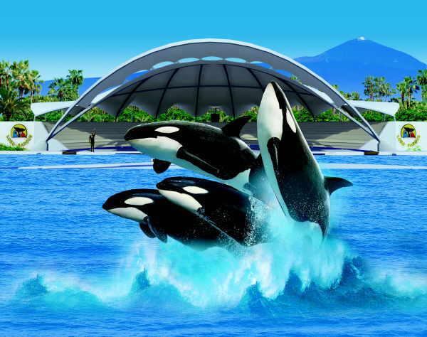 Orcas sind wilde Tiere, die auch gefährlich werden können